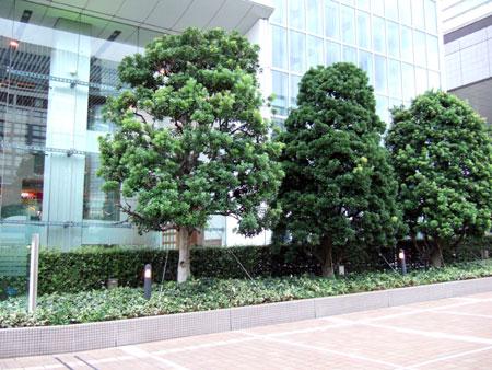 タイムズスクエアーの樹木たち6