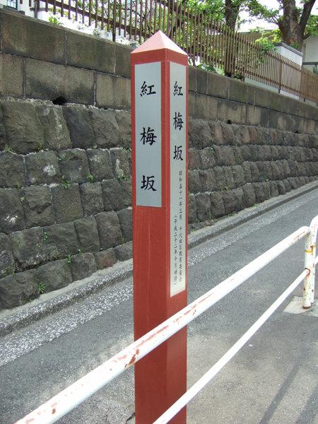 紅梅坂(NO.207)4
