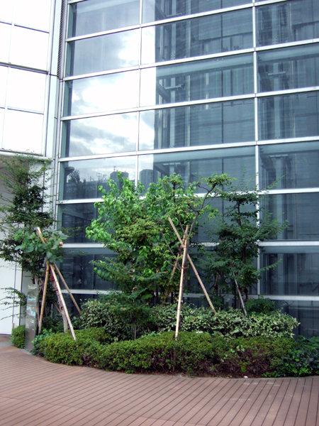 タイムズスクエアーの樹木たち4
