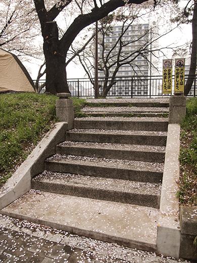 外濠公園の桜を見ながら坂道も3