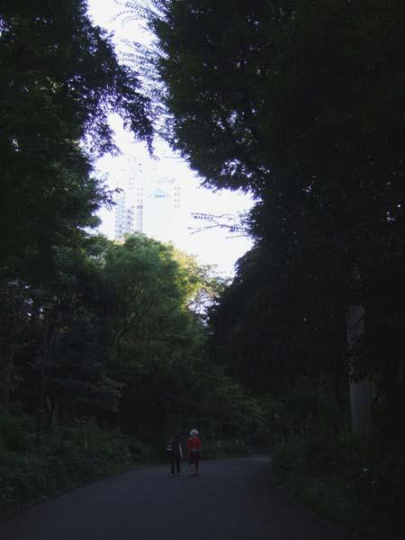 夏の新宿中央公園2
