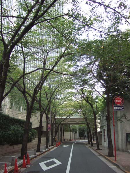 雁木坂 (NO.116) 2