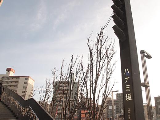 ハナミ坂(NO.271)2