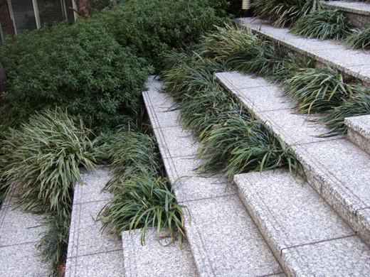 泉ガーデンの階段いろいろ2