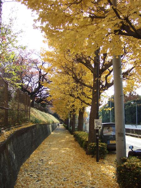 首都高新宿線の出入口あたりの坂2
