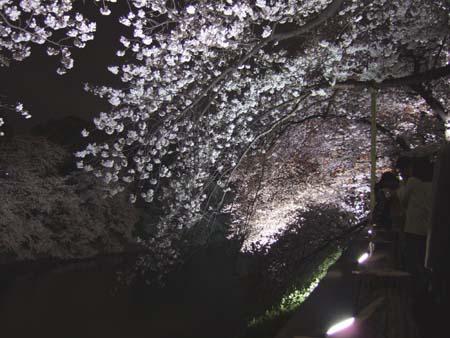 九段下の夜桜2