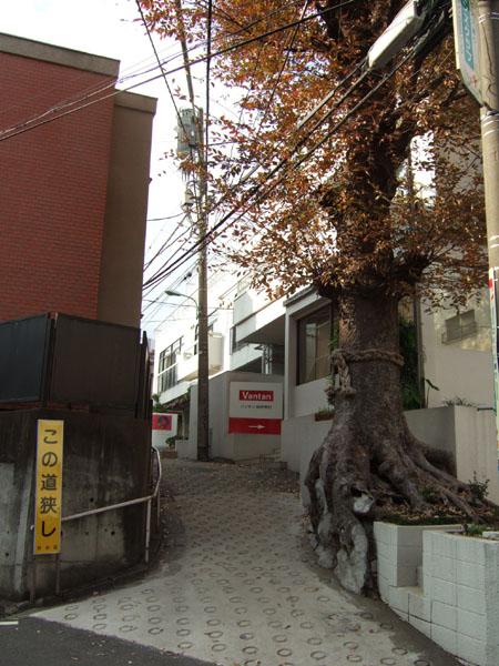 新富士坂の枝分かれ1