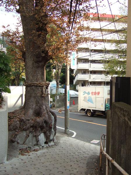 新富士坂の枝分かれ3