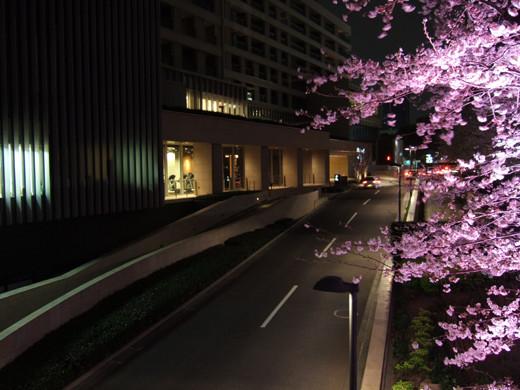 東京ミッドタウンの坂と桜2