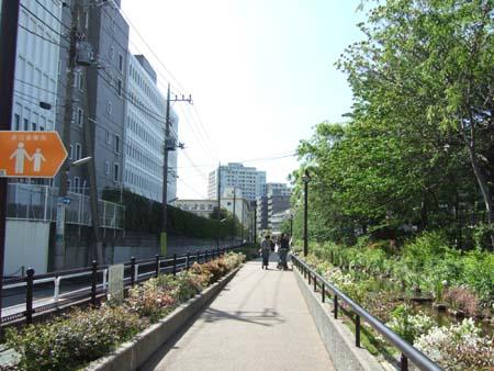 目黒川緑道2