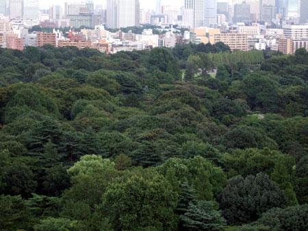 新宿樹々景2