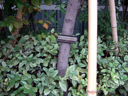 タイムズスクエアーの樹木たち5
