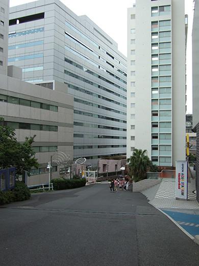 いちょう坂(NO.244)5