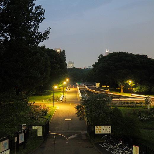 代々木公園定期観測2017-1