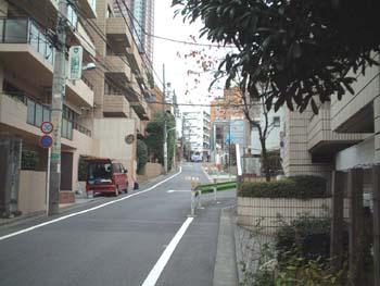 fujisaka7_sakasita