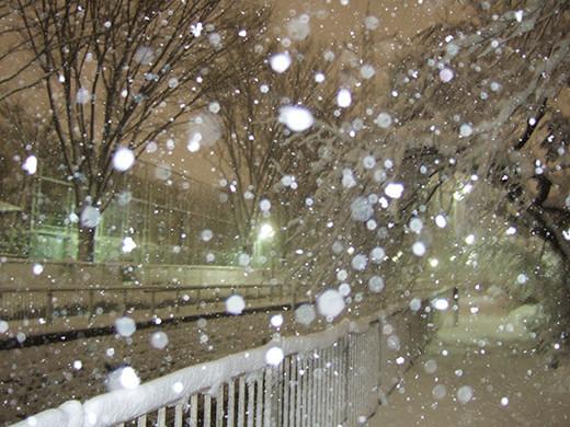 まさかの大雪2