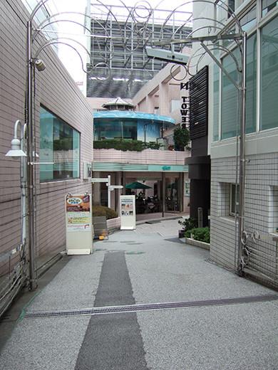 いちょう坂(NO.244)2