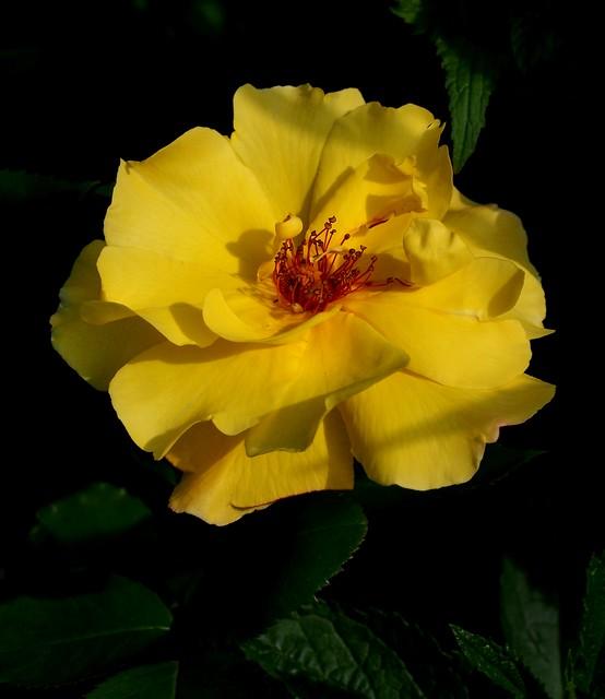 YellowSimplicity
