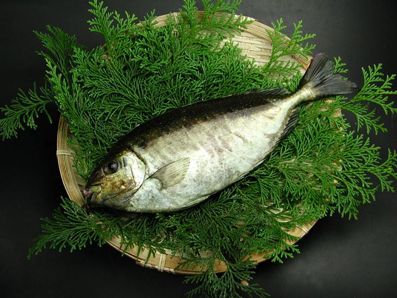 食材館さんのHP_aigo[1]