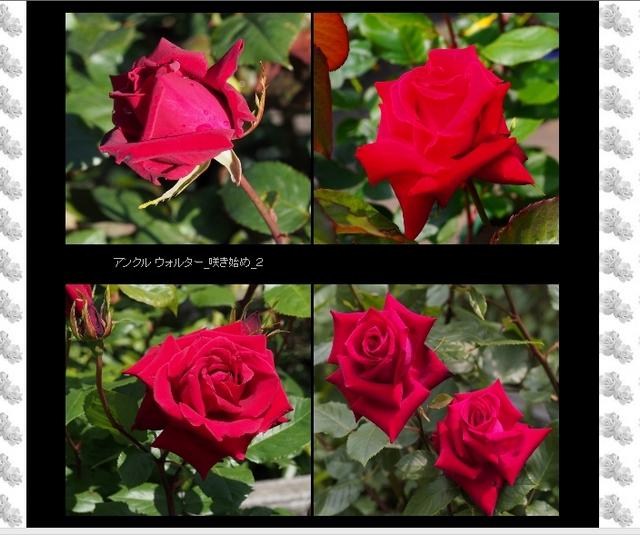 四季の庭_薔薇の園の詳細頁(2)