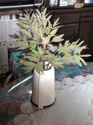 花瓶で咲かす