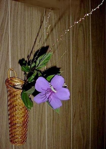 季(とき)の庭HP_野牡丹・水引