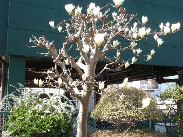 白花ずくし