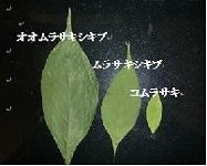 葉の大きさ