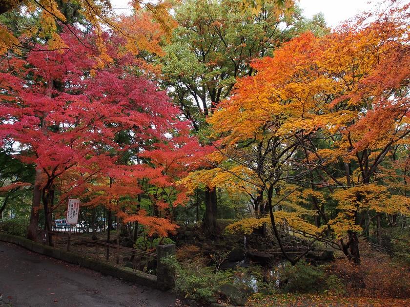 記念館前の紅葉