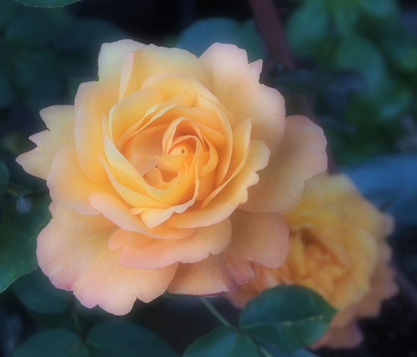 黄色~黄金色は 優しさ