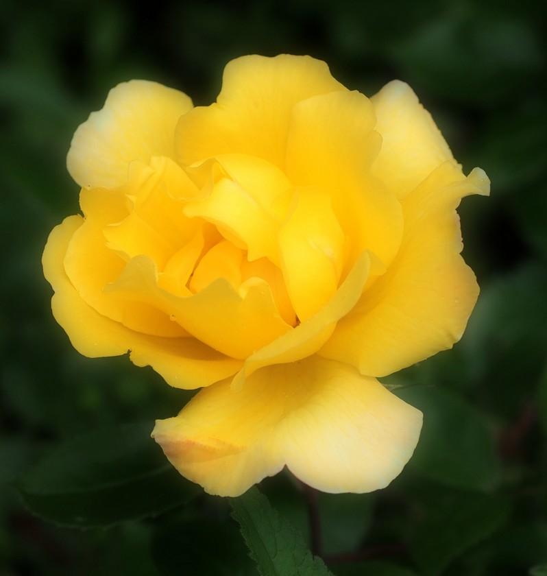 YellowSimplicity_5.14