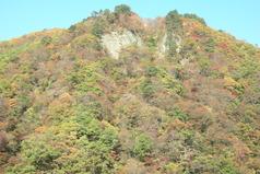 鳴子ダムの紅葉