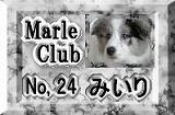 MarleClub
