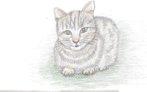 猫発見2.