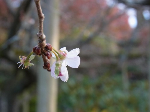 20111122ohhara -jikkoin(145)