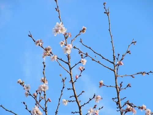 20111122ohhara -jikkoin(149)