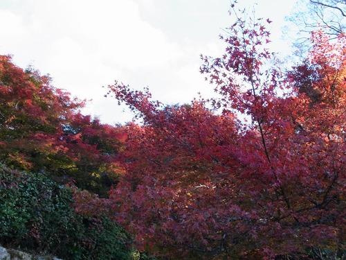 20111122ohhara -jikkoin(163)