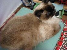 短足ぶさ猫ぺちゃ猫ちょー美猫