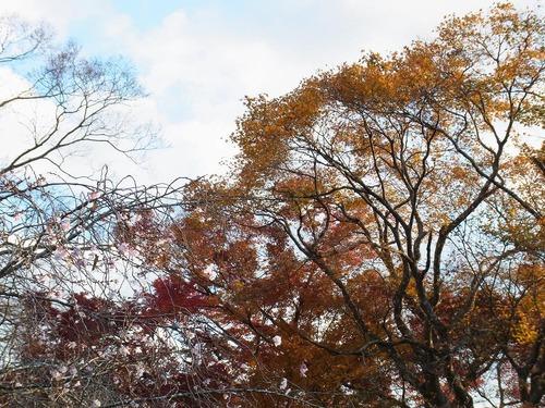 20111122ohhara -jikkoin(150)