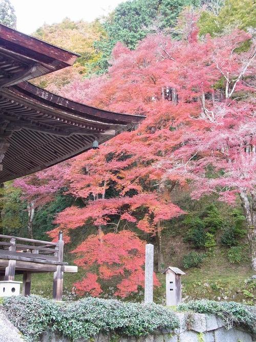 20111122ohhara -shorinin(72)