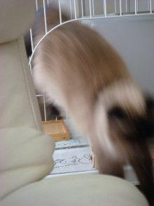 京都在住≪兎椛≫楽園猫生活