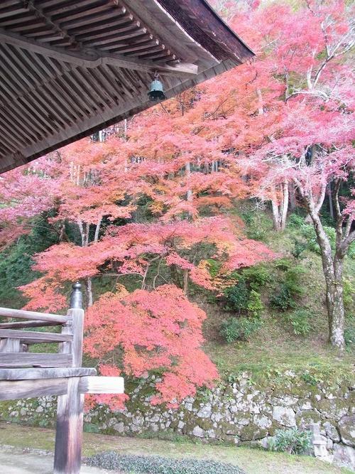 20111122ohhara -shorinin(74)