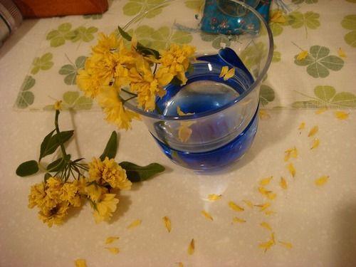 20090427tsurubara.jpg