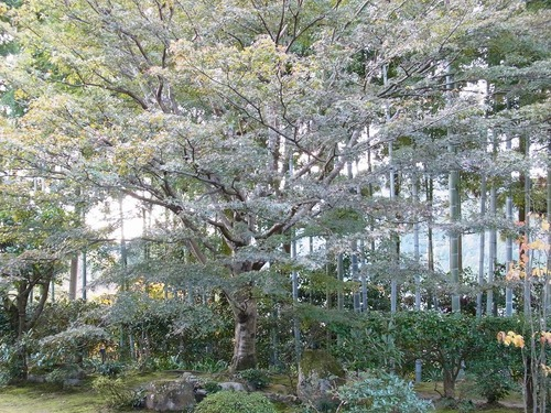 20111122ohhara -hosenin(64)