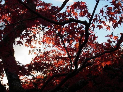 20111122ohhara -jikkoin(156)