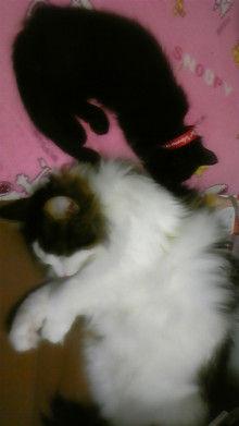 京都在住≪兎椛≫楽園猫生活-DVC00157.jpg