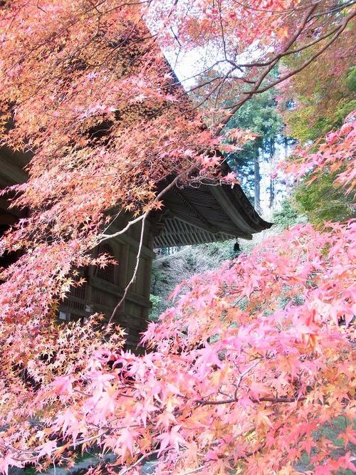 20111122ohhara -shorinin(109)