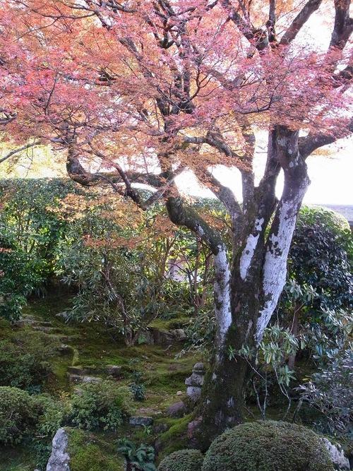 20111122ohhara -jikkoin(139)