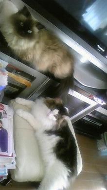 京都在住≪兎椛≫楽園猫生活-DVC00151.jpg