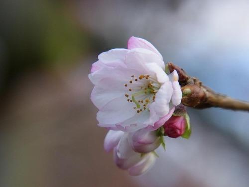 20111122ohhara -jikkoin(147)